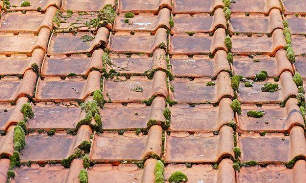 Démoussage de toiture : tout ce qu'il faut savoir sur le sujet
